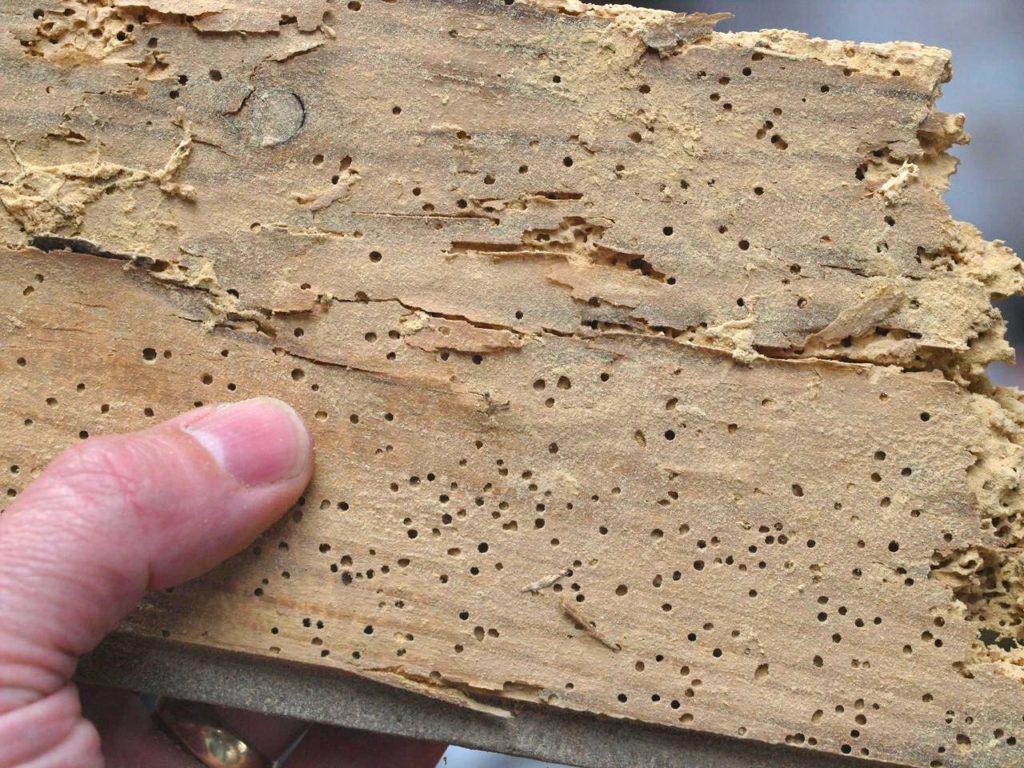 Уничтожение жуков-короедов в Феодосии