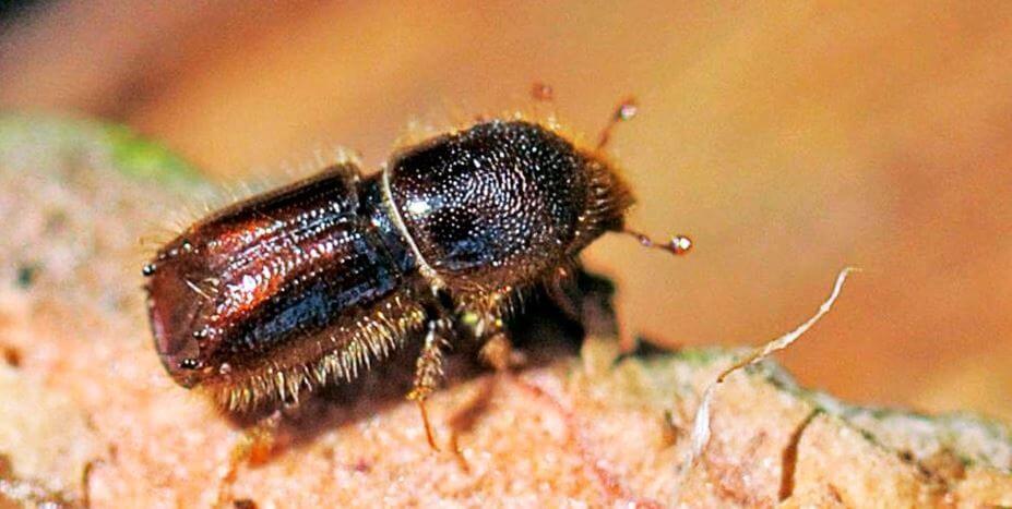 уничтожение жуков короедов