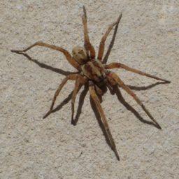 Уничтожение пауков в Сургуте